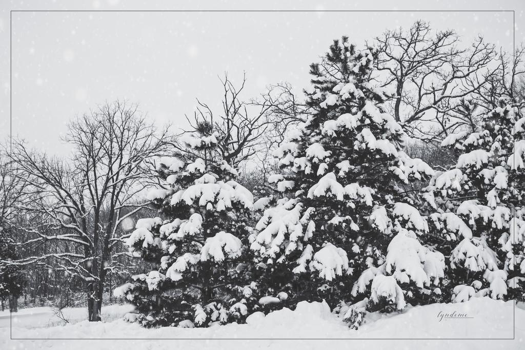 Winter Wonderland by lyndemc