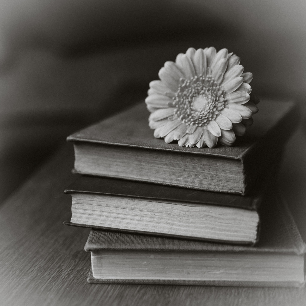 Flower and Book by newbank