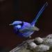Gotcha _DSC4938 by merrelyn