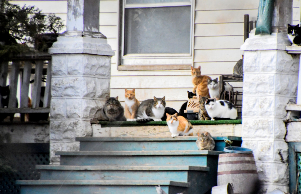 Porch Full of Cats by kareenking