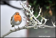 29th Jan 2019 - All puffed up against the cold