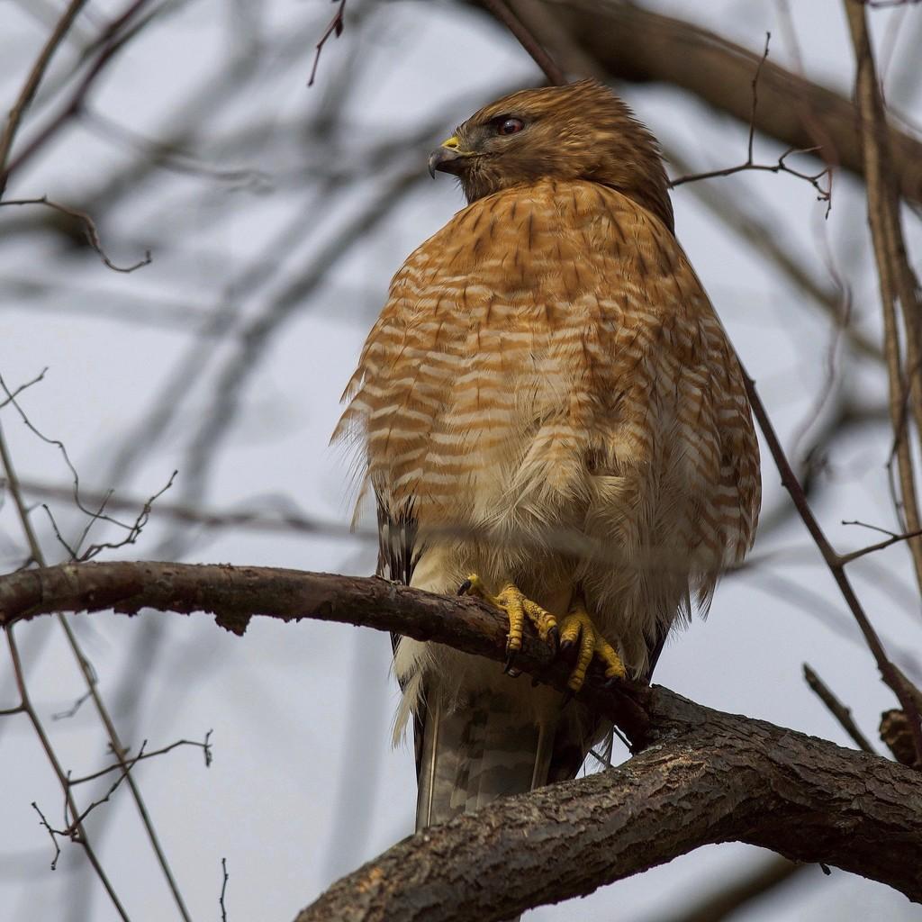 Backyard predator by berelaxed
