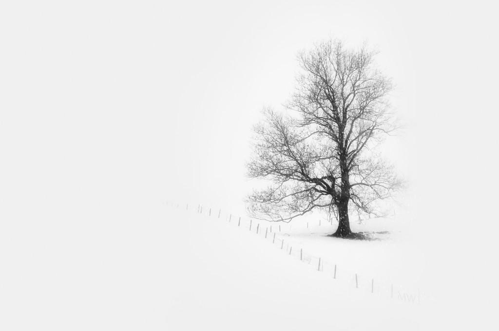 2019-01-29 winter tree by mona65