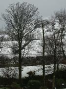 29th Jan 2019 - snow today