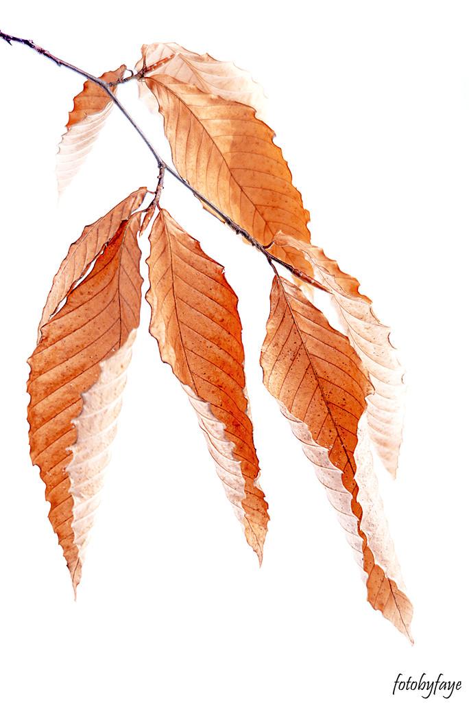 Beautiful old leaves! by fayefaye