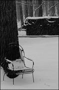 29th Jan 2019 - Snowy Day
