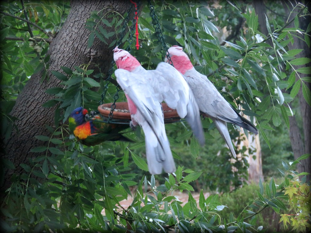 parrot party by cruiser