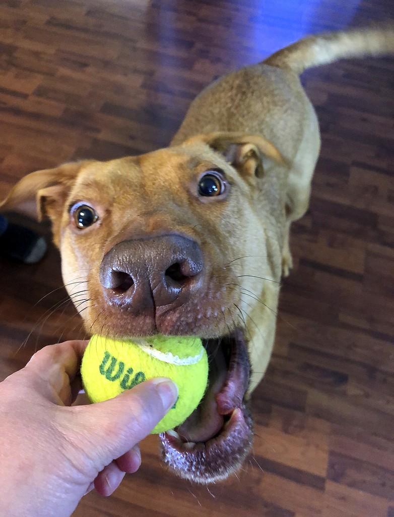 Play ball! by homeschoolmom