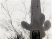 30th Jan 2019 - arizona shadows
