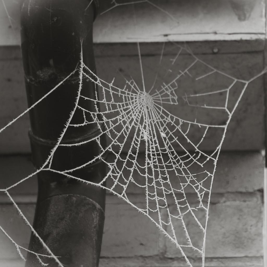 Web by newbank