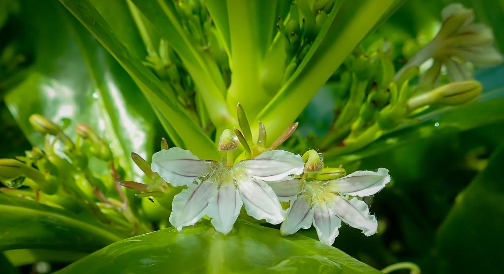Hidden Flower by cm_saratoga