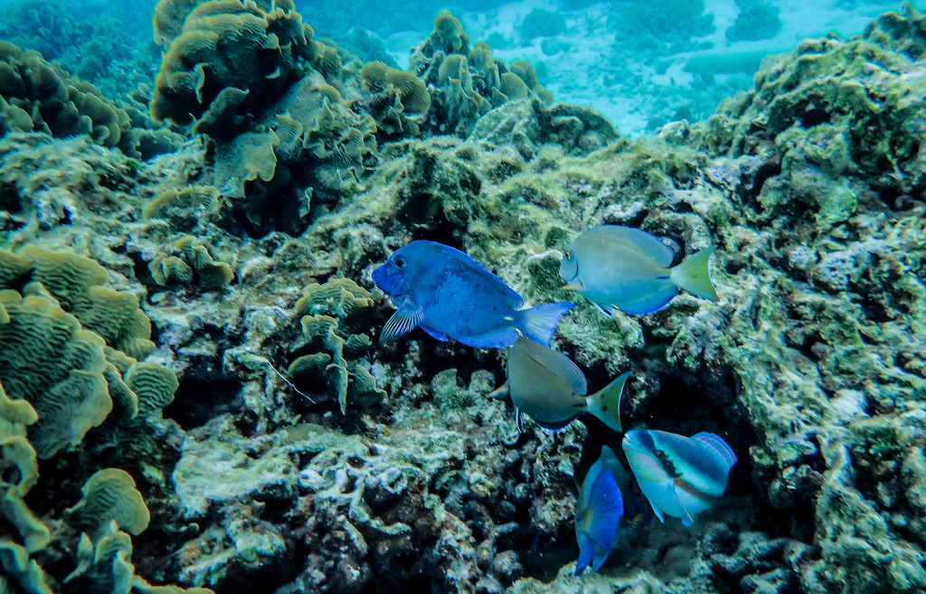 Snorkeling in Roatan by cm_saratoga