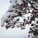 Snowy bush by mittens