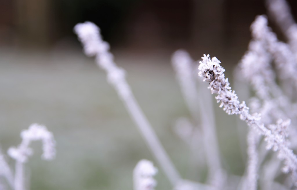 Brrrrrrrrr by phil_sandford
