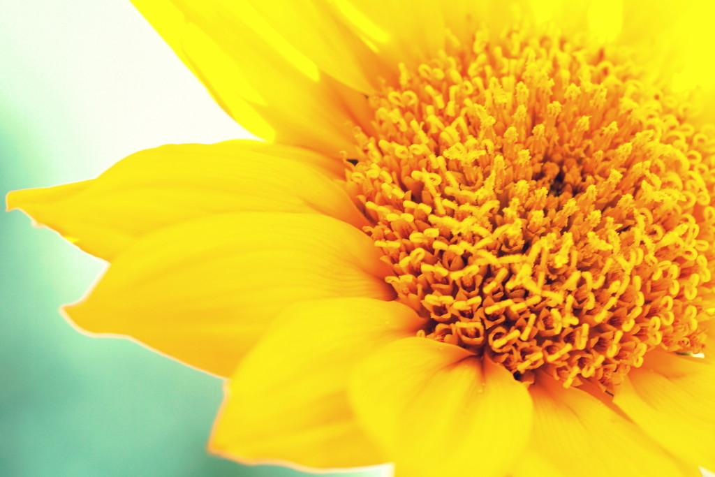 Yellow Joy by sunnygirl