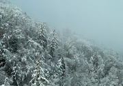 1st Feb 2019 - Snow and fog.