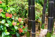 29th Jan 2019 - black bamboo and Ixora flowers