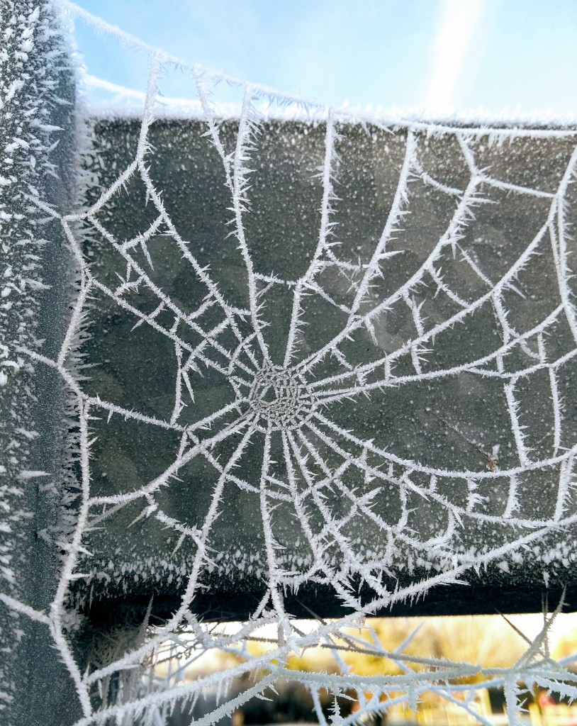 Frosted web I by 4rky