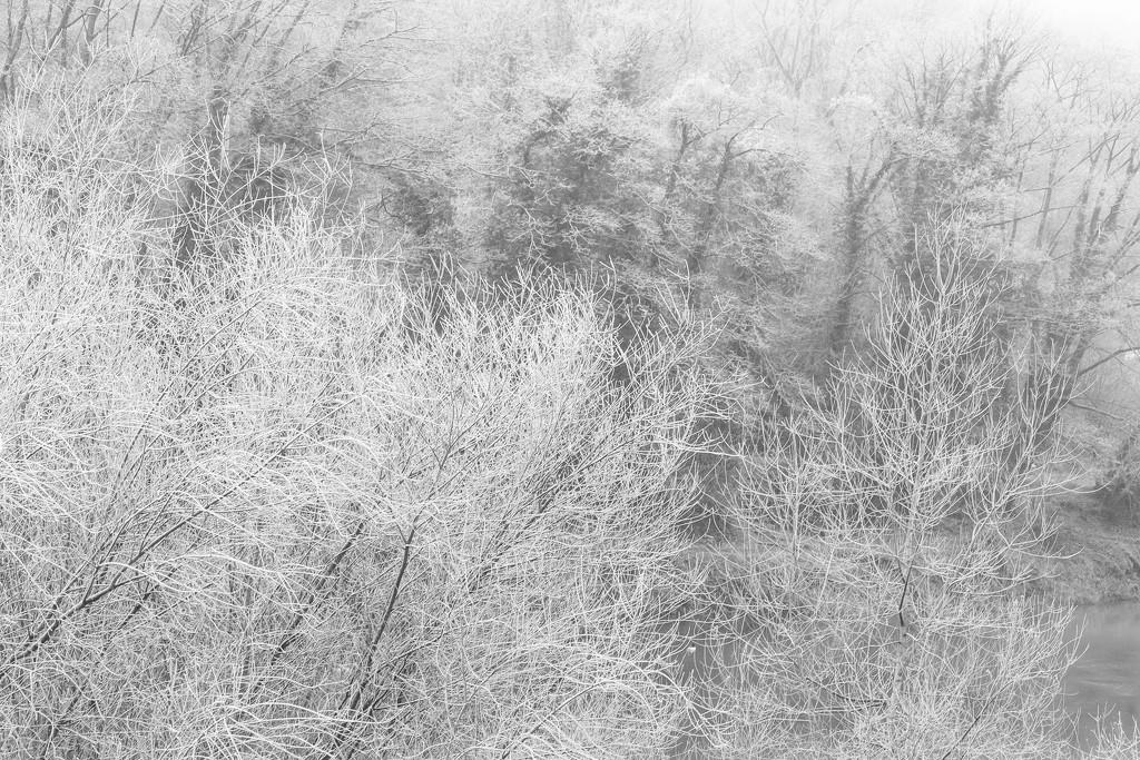Frosty Trees by dorsethelen