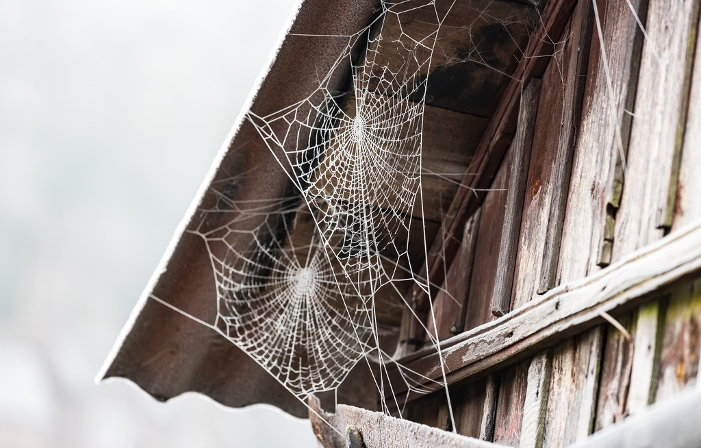 Cobwebs on the Coracle Shed by dorsethelen