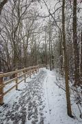 1st Feb 2019 - 2019 02 01 - Walking in the Woods