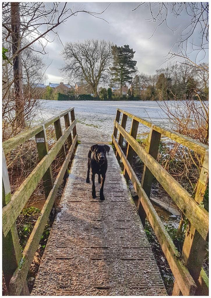 On the bridge by lyndamcg