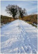 1st Feb 2019 - Snowy walk today