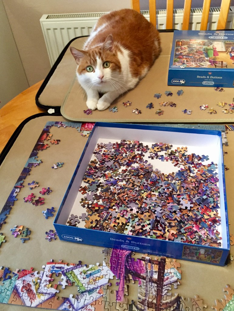 Help With My Jigsaw Puzzle by gillian1912
