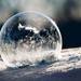 obligatory bubble
