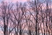 1st Feb 2019 - Backyard Sunrise