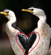 2nd Feb 2019 - Comerant heart