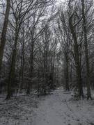 1st Feb 2019 - Walk in the Woods