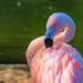 Flamingo Friday '19 05 by stray_shooter