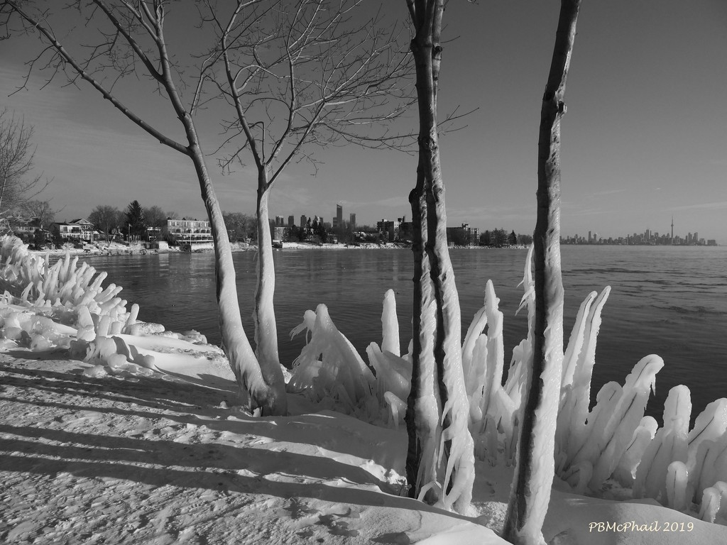 Ice Wrapped Trees in B&W by selkie