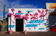 2nd Feb 2019 - desert flamingos
