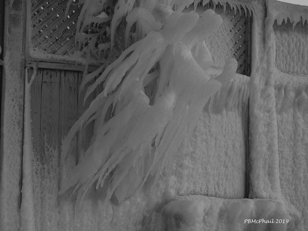 Ice Sculpture by selkie