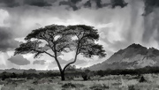 1st Feb 2019 - African Tree and Mountain