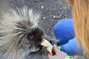 2nd Feb 2019 - How To Feed A Porcupine