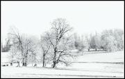 2nd Feb 2019 - Trees along the frozen lake