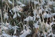 22nd Jan 2019 - Icy moths