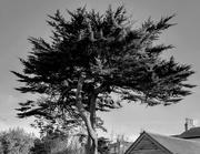 1st Feb 2019 - Back garden tree
