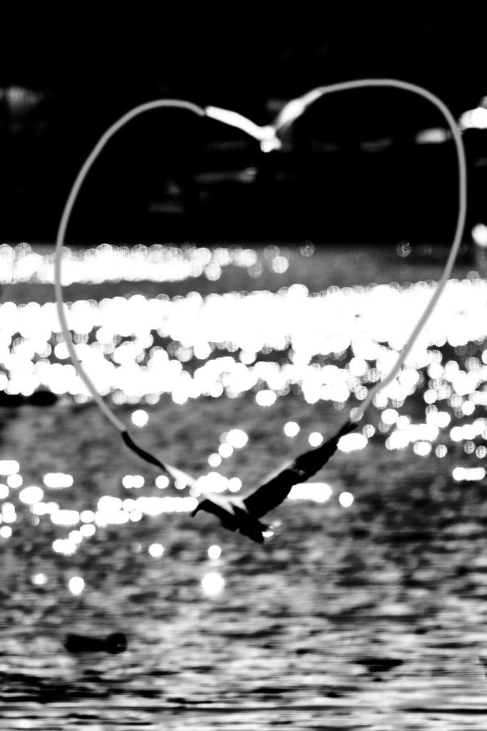 bird heART by sugarmuser