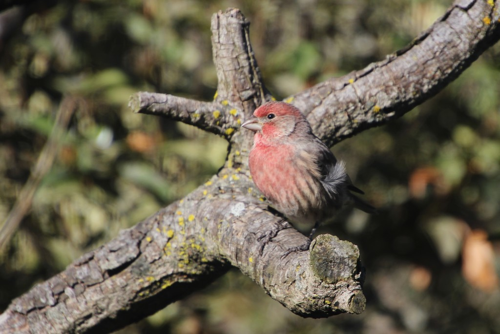 Pretty Finch! by bjchipman