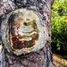 Smiley tree