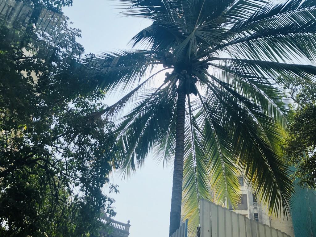 The palm tree silhouette  by veengupta