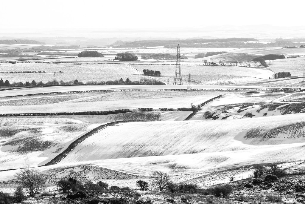 Snow Fields by dorsethelen
