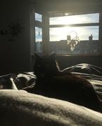 3rd Feb 2019 - Lazy Sunday Morning