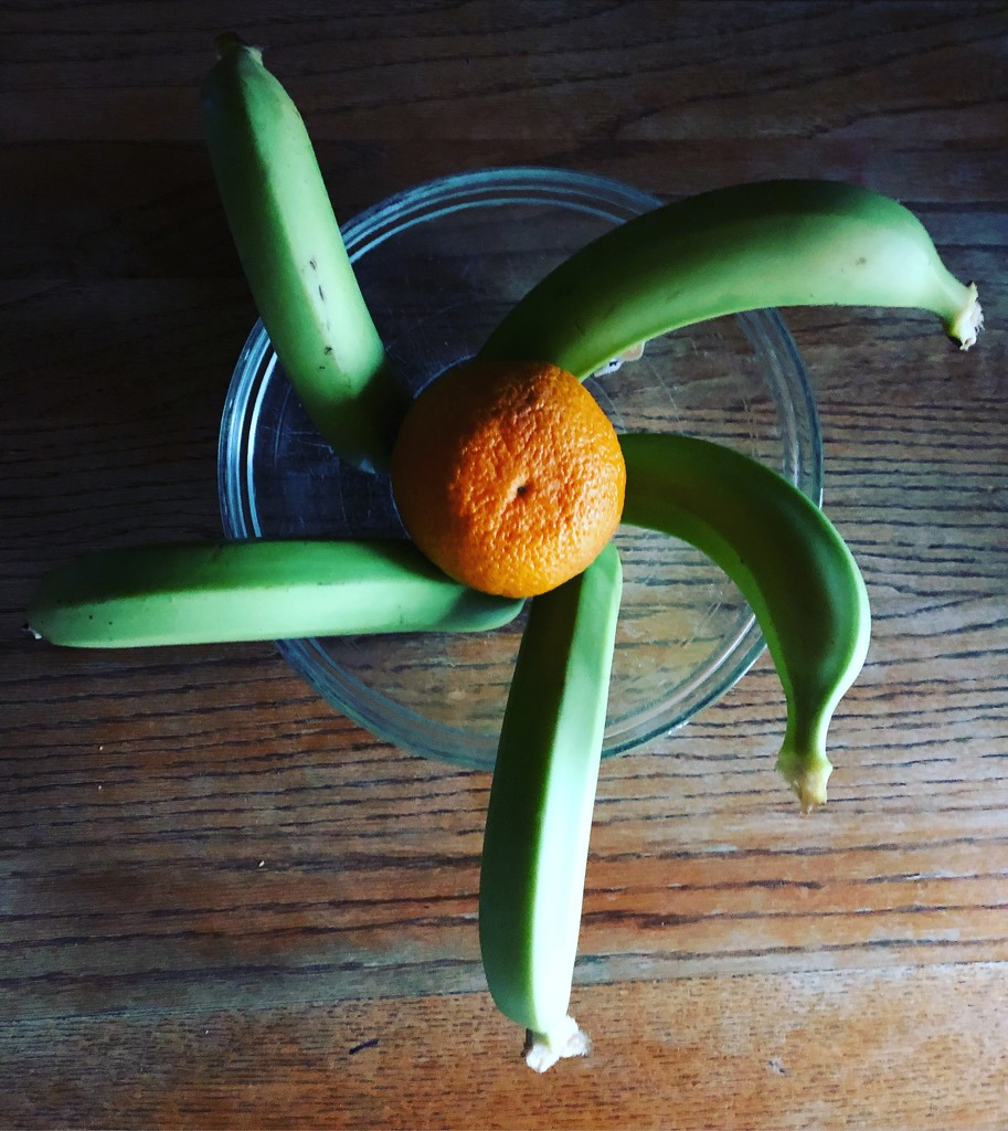 Sumo citrus by nanderson