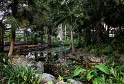 4th Feb 2019 - Southbank garden, Brisbane
