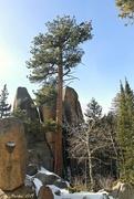 2nd Feb 2019 - Pine Tree Above the Rocks